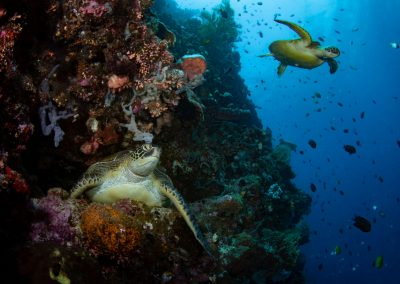 Bunaken Reef & turtles